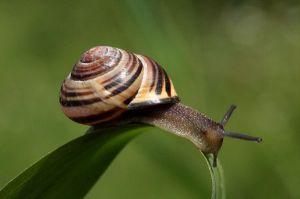 snail_sliding_down_a_leaf_600